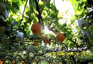 2016년 제18회 지평선축제 동영상(일본어)