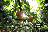 2016년 제18회 지평선축제 동영상(중국어)